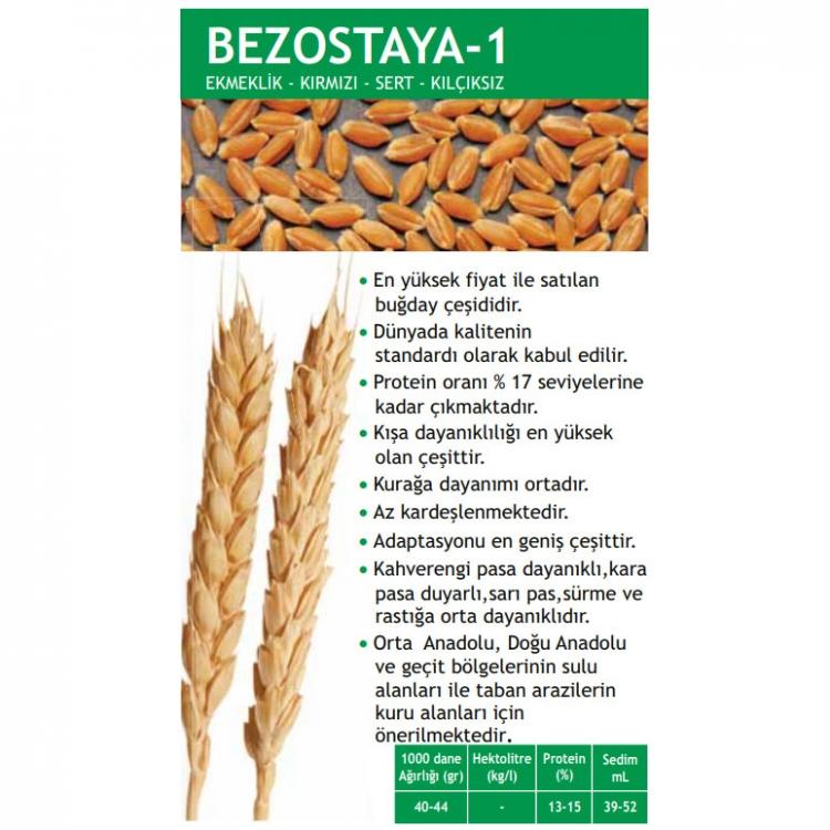 Bezostaya-1 1